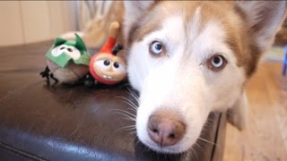 Best Fiends Forever with Mishka and Laika the Huskies