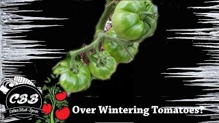 It's the middle of winter here in Australia, and I thought I might go over tomato growth during our coldest months.If you have any questions, please ask below.