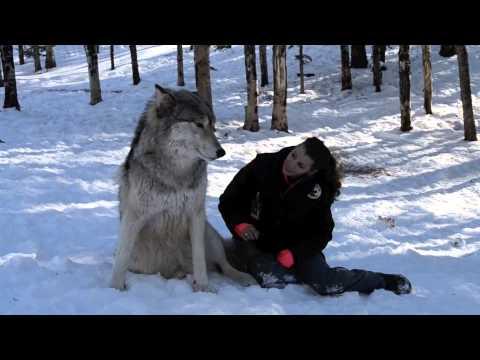 她對著眼前很大一隻的狼擺出擁抱的姿勢時,完全沒料到牠竟會做出讓人笑得超大聲的反應!