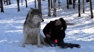 Olbrzymi wilk potulnie siada tuż przy niej! Teraz zobacz co się dzieje gdy spojrzeli sobie w oczy!