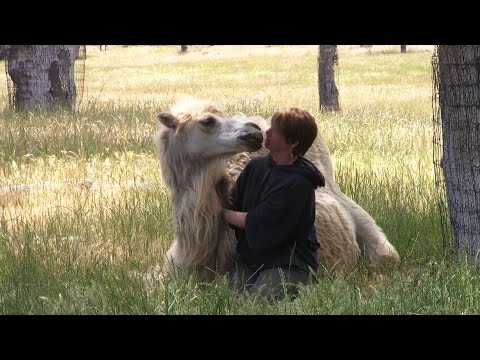 Meeting Sacred Camels