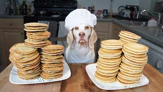 Funny Chef Dog Maymo Makes Pancakes by Maymo
