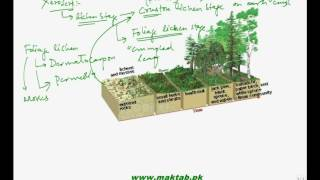 This video lecture from Ecosystem (F.Sc. second year Biology) covers succession i.e. how new life starts on a place where was no life present in past. It covers all the steps and types of succession. Find more e-learning material and educational video lectures in Urdu at maktab.pk. These videos are free to use for promotional and commercial purpose by keeping the credits to Maktab.