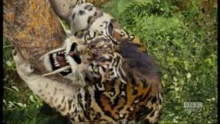 Sabre-toothed tiger attack  - Primeval - BBC America