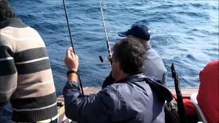 Video Pesca Pargos em cascais no Barco Micas.wmv MP3, 3GP, MP4, WEBM, AVI, FLV Desember 2017