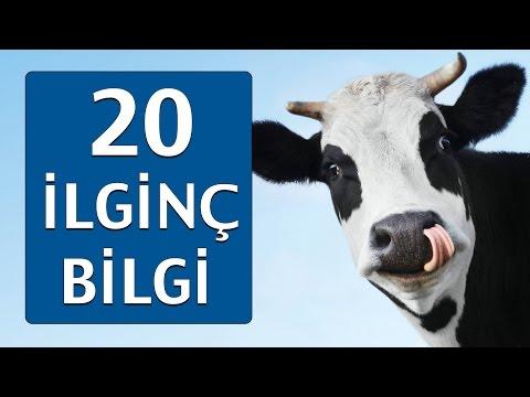 Hayvanlarla İlgili OHA Diyeceğiniz 20 Bilgi