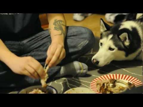 Собака просит кусок курочки