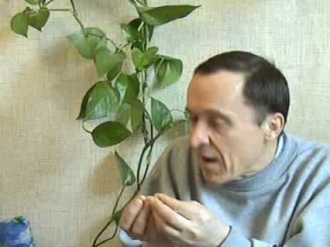 Свами Йога Камал \Основное препятствие на пути внутрь\ - DomaVideo.Ru