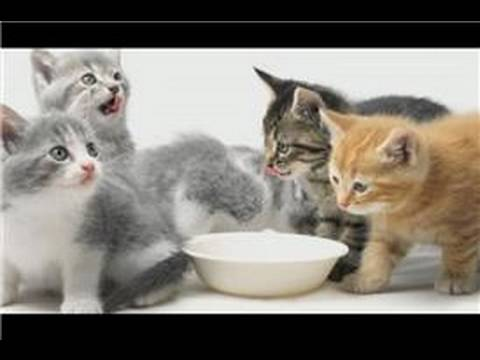 Kitten Care : Kitten Care Tips