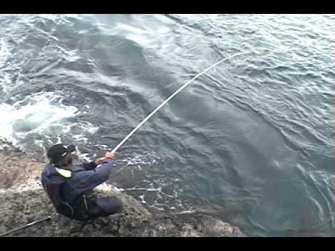 未公開之衝擊影像 ! 擒獲巨大真鯛