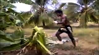 Guy Kick Bananas Tree Down... Wow!