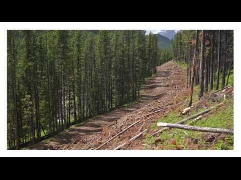 Postcards from Hidden Creek
