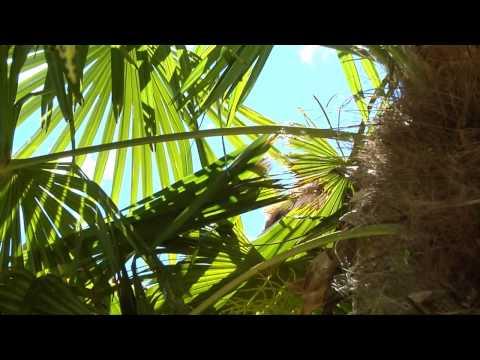 comment traiter palmier contre papillon