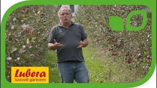 Werdenberger Innovationspreis 2018 - Firmenportrait Lubera® (Schweizerdeutsch)