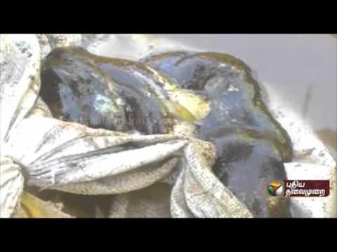 65-kilo-sea-leeches-seized-in-Tuticorin-one-arrested-06-03-2016