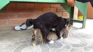 Lucu kucing bikin anak astra jingga