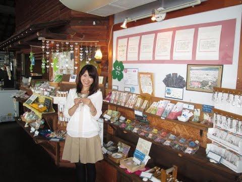 【行ってみた!】鹿児島パワースポットの旅