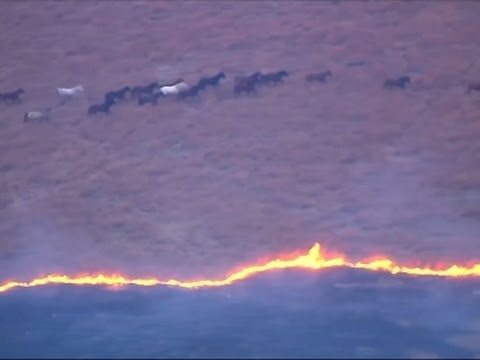 Wild Horses Escape From Grass Fire