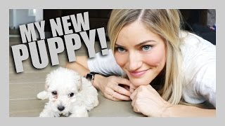 Download Youtube: I GOT A PUPPY! | iJustine
