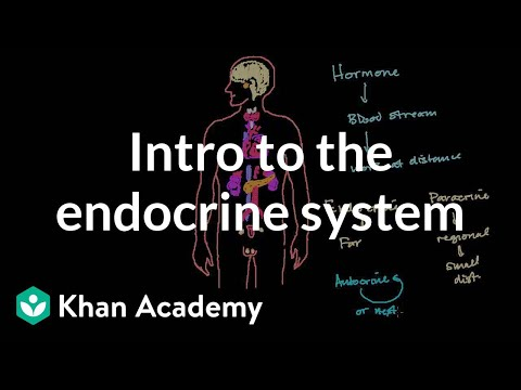 Healthcare and Medicine: Endocrinology and Diabetes
