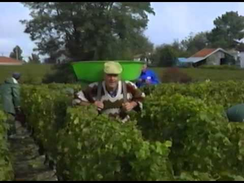 Cooking in France: Wine & Goose Bourdeaux & Gascony