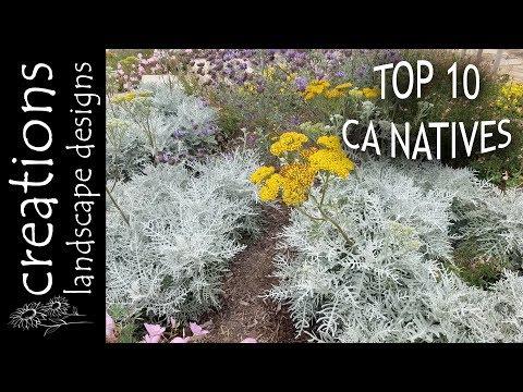 Top 10 California Native Plants