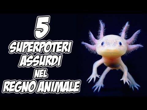 5 superpoteri assurdi nel regno animale - esilarante!