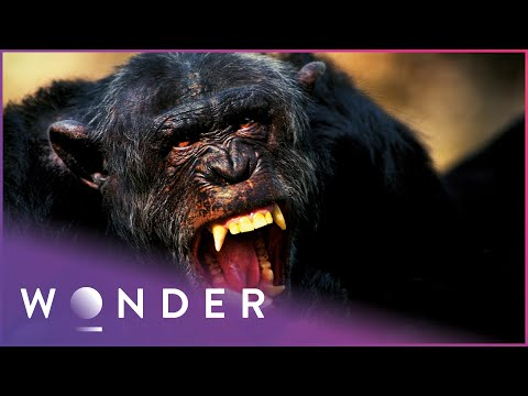 Woman Is Viciously Attacked By Dangerous Tiger | Human Prey S1 EP1 | Wonder