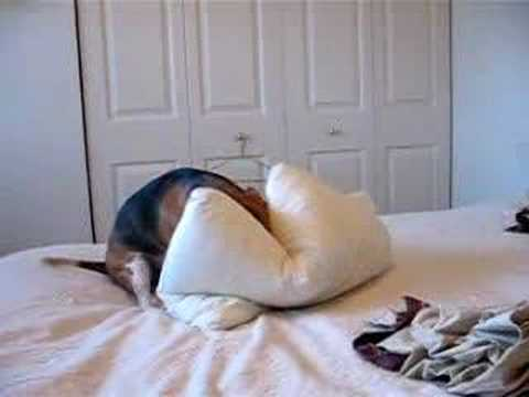 i hate the pillows!