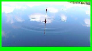 поплавочная поклевка
