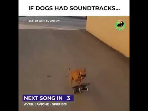 If Dogs Had Soundtracks😂😂