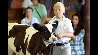 Junior Fair Dairy Showmanship and Open Class Dairy Cattle Judging LIVE from Dodge County Fair