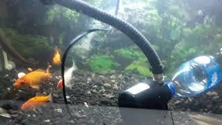Video Cara mudah bersihkan pasir di aquarium tanpa angkat pasir dan ikany MP3, 3GP, MP4, WEBM, AVI, FLV Juni 2019