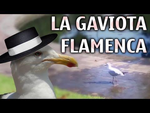 La gaviota flamenca