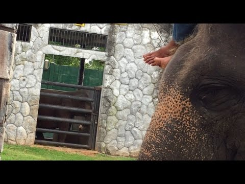 Shocking footage a reminder never to ride an elephant on holiday