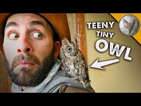 teeny tiny OWL! (o)v(o)