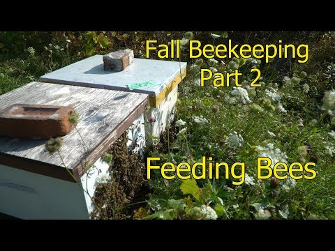 Fall Beekeeping Part 2: All About Feeding