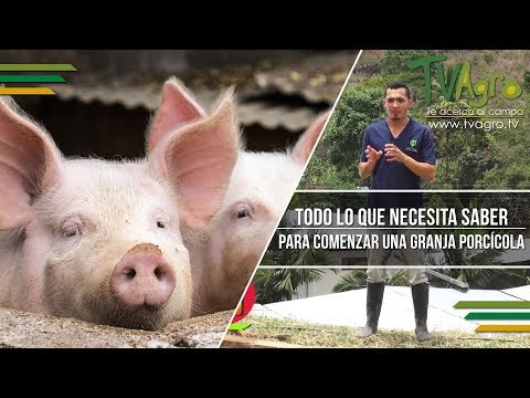 Peso ideal - Todo lo que Necesita Saber para Comenzar una Granja Porcícola - TvAgro por Juan Gonzalo Angel