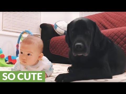 un-fedele-baby-sitter