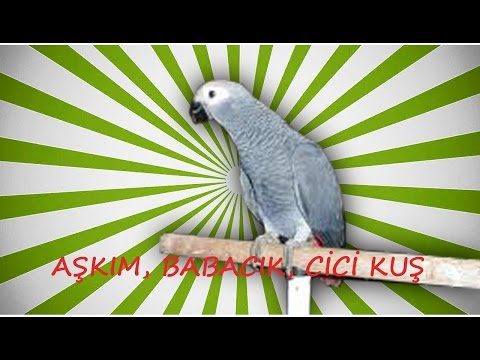 Video Papağan ve Muhabbet Kuşu ve Konuşturma Sesi AŞKIM, BABACIK, CİCİ KUŞ 3 SAAT download in MP3, 3GP, MP4, WEBM, AVI, FLV January 2017