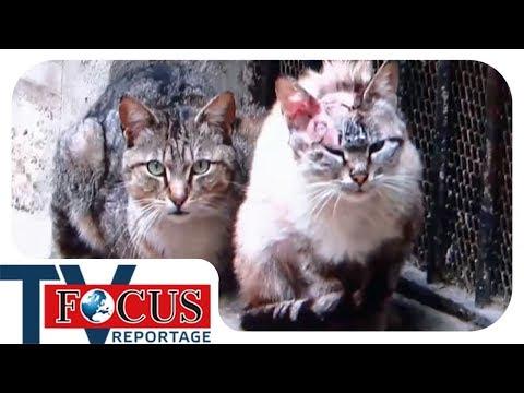 Katzenplage in Deutschland - Focus TV Reportage