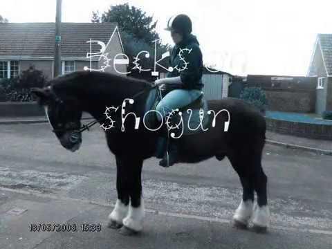 Video my horse shogun xXx download in MP3, 3GP, MP4, WEBM, AVI, FLV January 2017