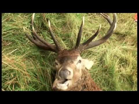 hunting-polowanie-chasse-jagt