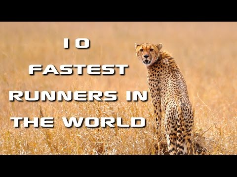 Top 10 Fastest Animals in the World: Fastest Runners in the Animal Kingdom - FreeSchool