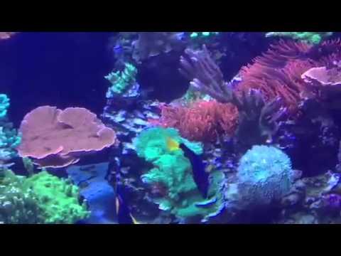 Portfolio Video 12