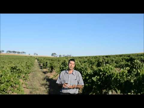 Elderton Wines Fifteen Shiraz video tasting note