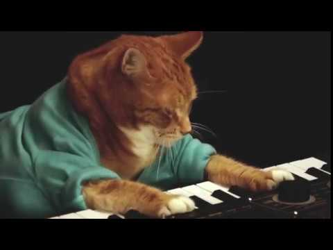 The Iconic Keyboard Cat Has Died ? & The Internet Has Gone Into Full Blown Mourning