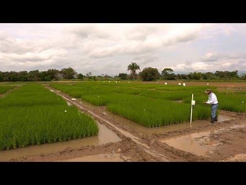 Κολομβία: Η αγροτεχνολογία στον αγώνα ενάντια στην κλιματική αλλαγή …
