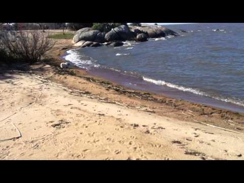 Berri na Lagoa dos Patos