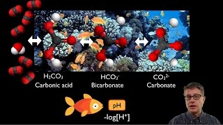 In this video Paul Andersen shows how carbon dioxide in the atmosphere is causing a decrease in the pH of the oceans. The carbon dioxide combines with the ...